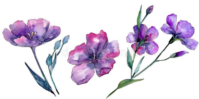 Lino viola Fiore botanico floreale Wildflower selvatico della foglia della molla isolato royalty illustrazione gratis