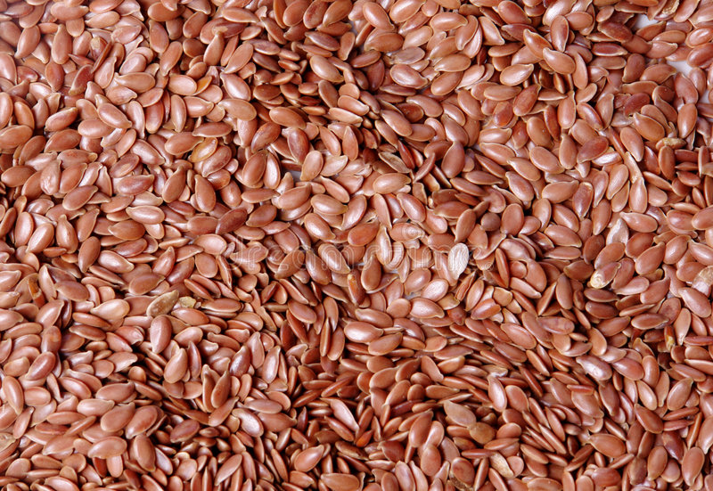 linseed obrazy royalty free