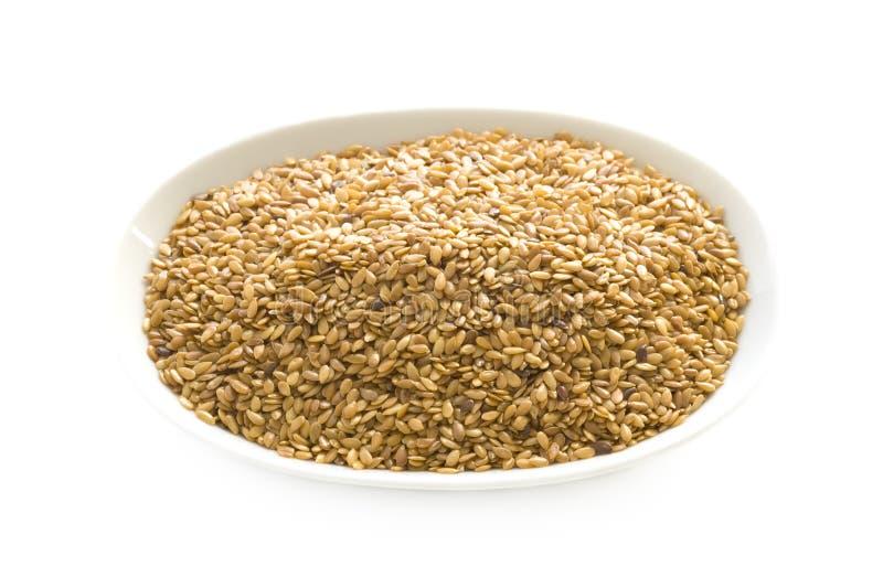 Linseed odizolowywający lub flaxseed obraz royalty free