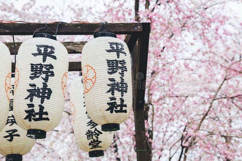Linterna del festival de la flor de cerezo de la capilla de Hirano en Kyoto, Japón fotos de archivo libres de regalías
