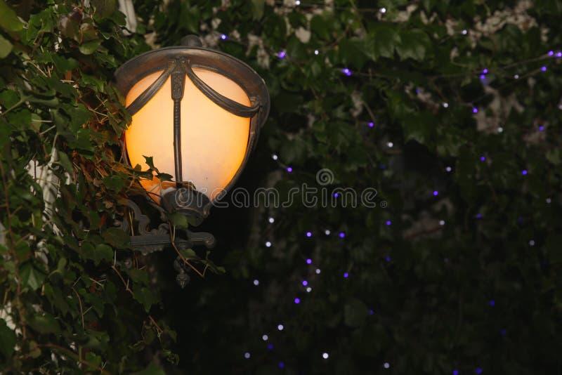 Linterna en el bosque Fairytale viejo farol contra el fondo de la hiedra y las luces festivas en borrosidad El concepto de Navida imagen de archivo libre de regalías