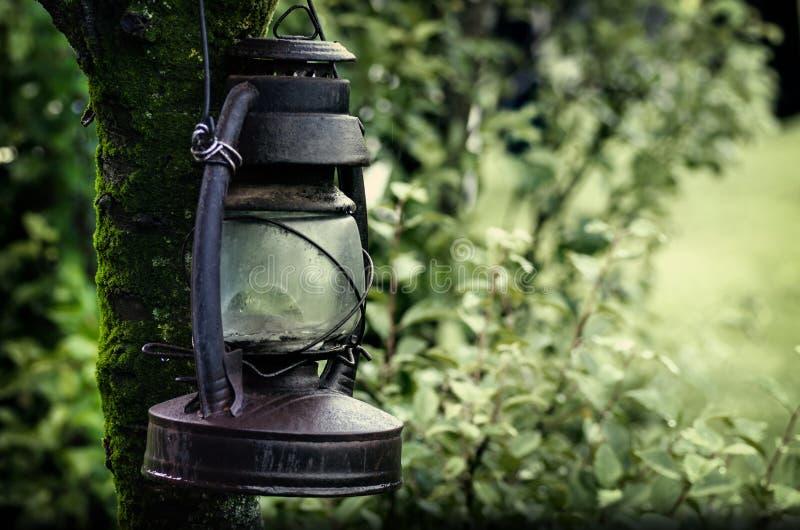 Download Linterna En Una Rama De árbol Imagen de archivo - Imagen de hanging, elegancia: 42442109