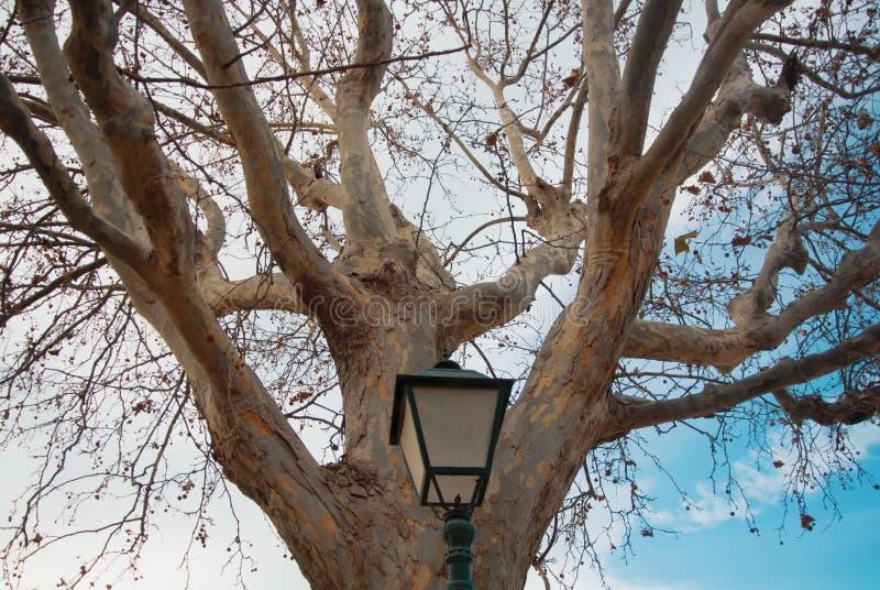 Linterna negra de la ciudad del metal cerca del árbol platan viejo grande en el invierno imágenes de archivo libres de regalías