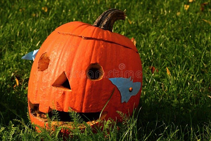 Linterna tallada escopleada con gubia espeluznante de Halloween Jack O de la calabaza que toma el sol en sol de la mañana fotografía de archivo libre de regalías