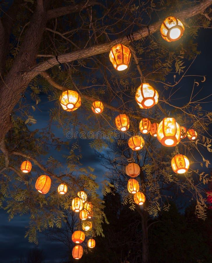 Linternas en árbol foto de archivo libre de regalías