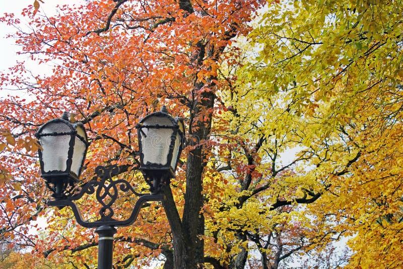 Linternas forjadas en el parque en el fondo de los árboles del otoño foto de archivo