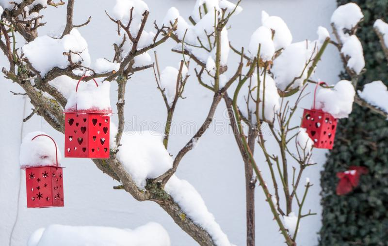 Linternas rojas decorativas con los corazones en un arbusto color de rosa nevado en invierno imagen de archivo