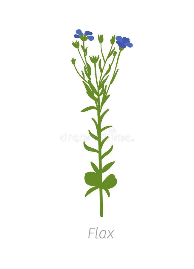 Linum usitatissimum del lino L'agricoltura ha coltivato la pianta di Linum fogli di verde Clipart piano dell'illustrazione di col illustrazione vettoriale