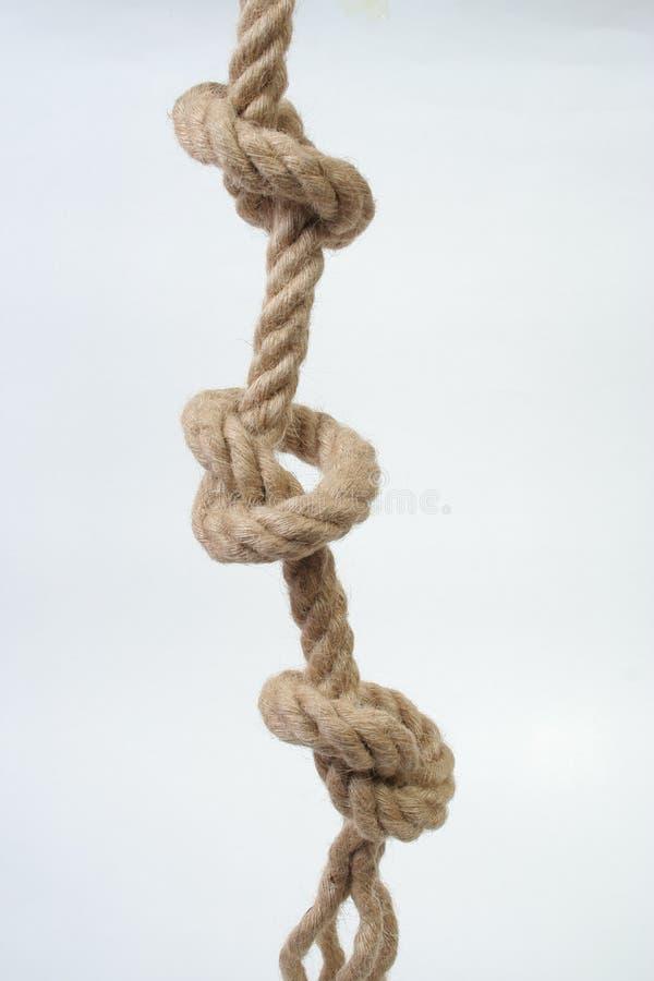 liny zdjęcie royalty free