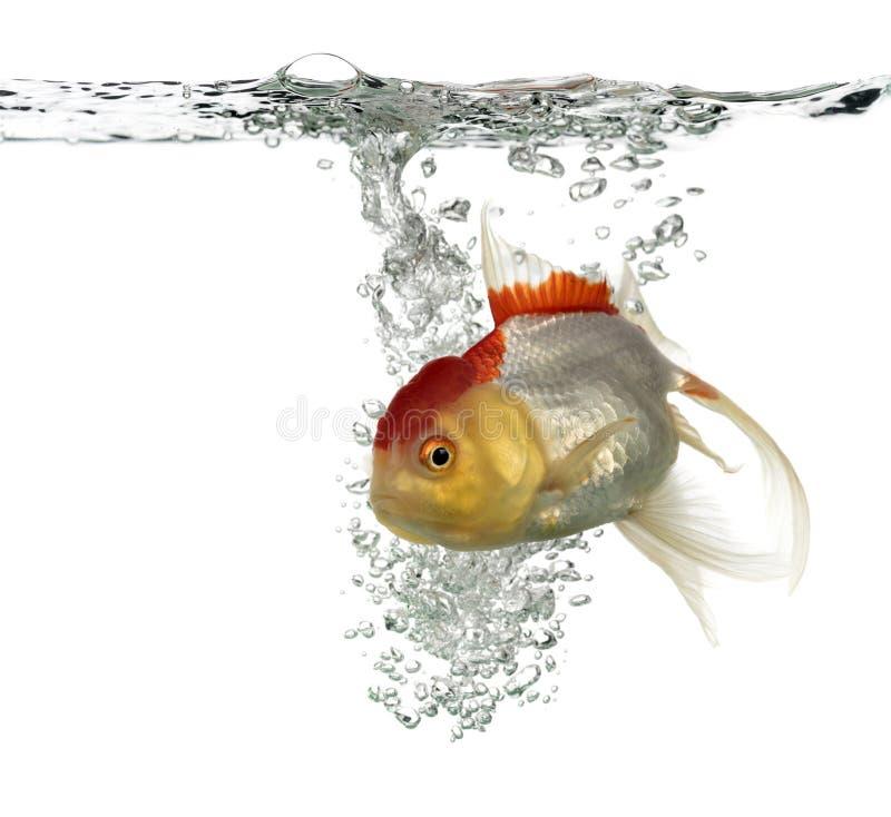 Картинка голова с рыбками