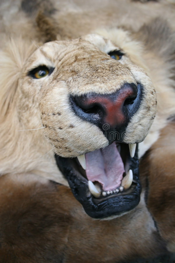Download Lion Stock Images - Image: 1412364