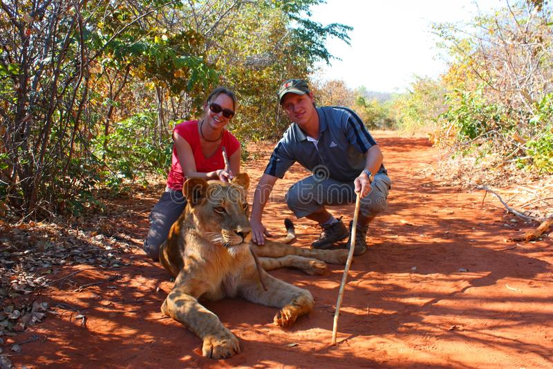Download Lion editorial stock image. Image of krueger, jungle - 26524094