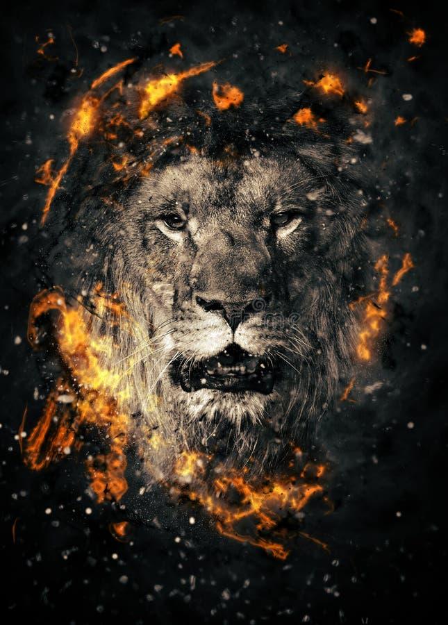 lion royaltyfria bilder
