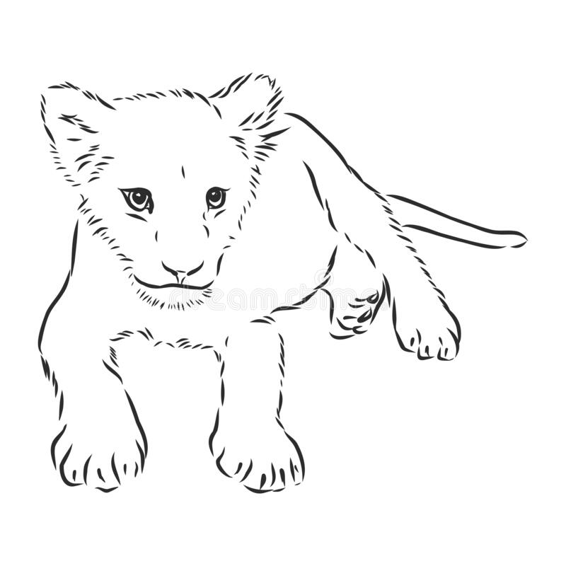 Lion Baby Sketch Stock Illustrations 1 251 Lion Baby Sketch Stock Illustrations Vectors Clipart Dreamstime We offer lion clipart in vector and raster formats. dreamstime com