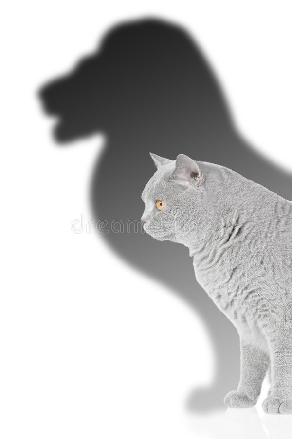 Lion and cat. Metaphor for growth, cat with shadow of lion royalty free stock photography