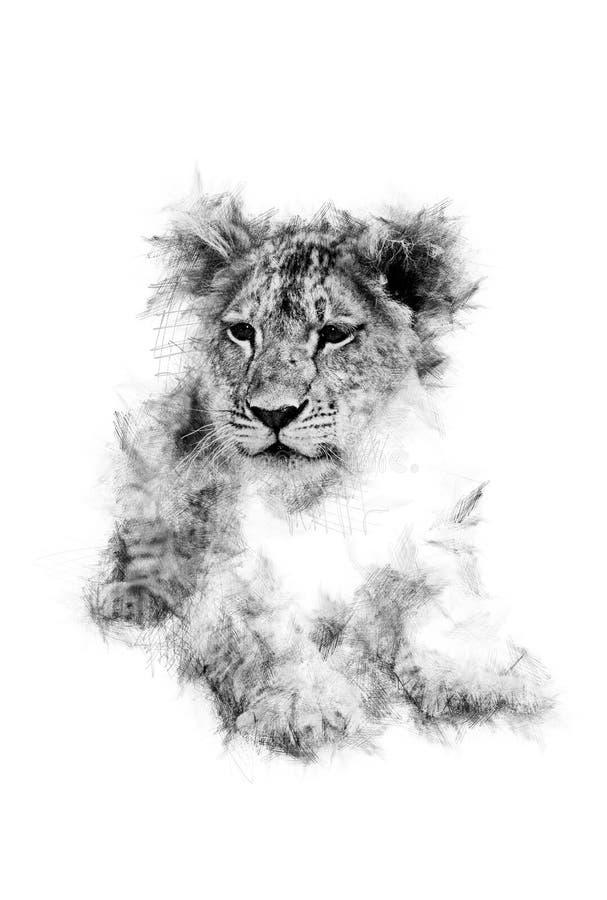 Lion Cub Scratch arkivfoton