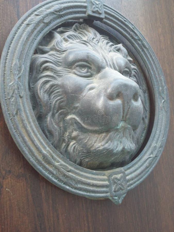 Lion dans la porte photographie stock libre de droits