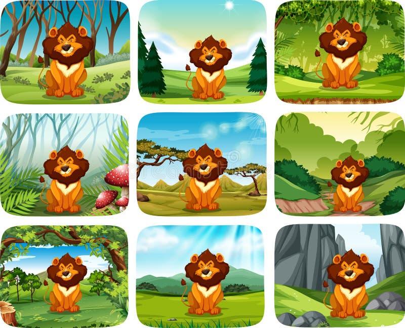 Lion Different Scene Pack ilustração royalty free