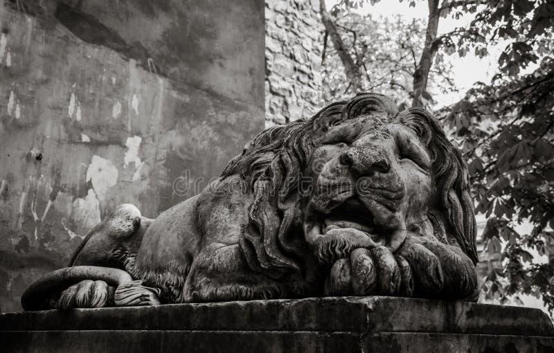Lion en pierre antique Le symbole de la ville de Lviv photographie stock