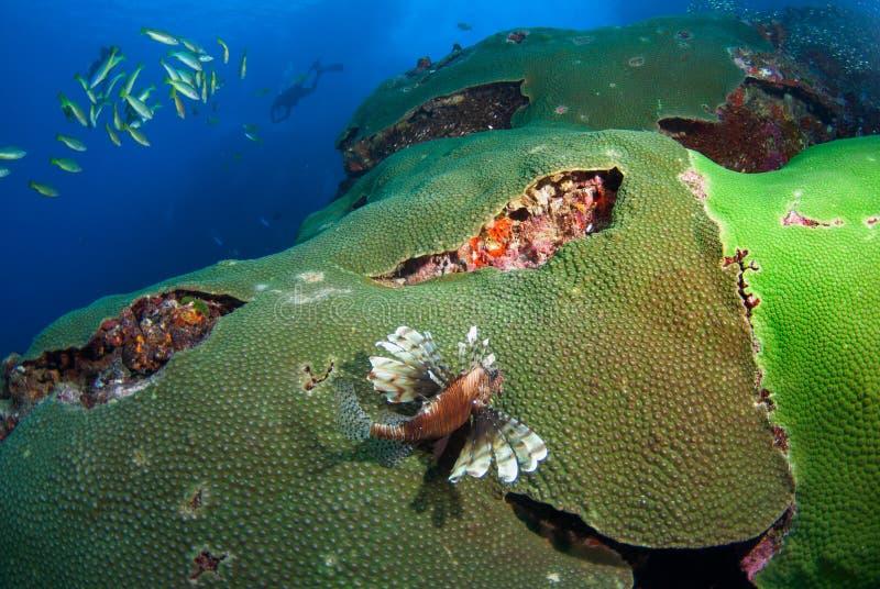 Lion Fish, in het Noorden Andaman, Zuidelijk Thailand royalty-vrije stock afbeeldingen