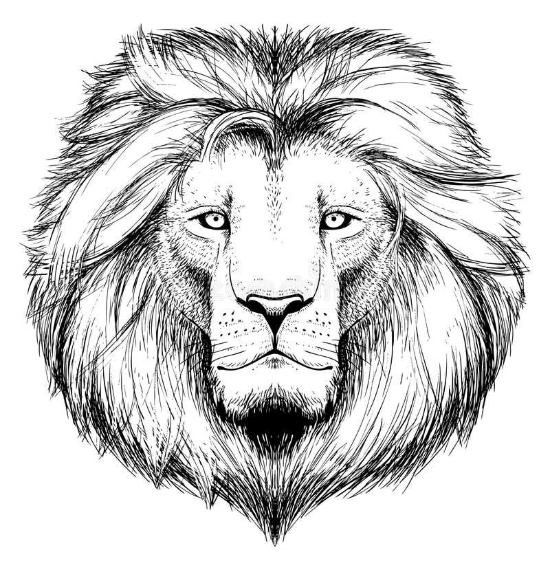 Download Lion head stock vector. Image of detailed, portrait, monochrome - 21172580