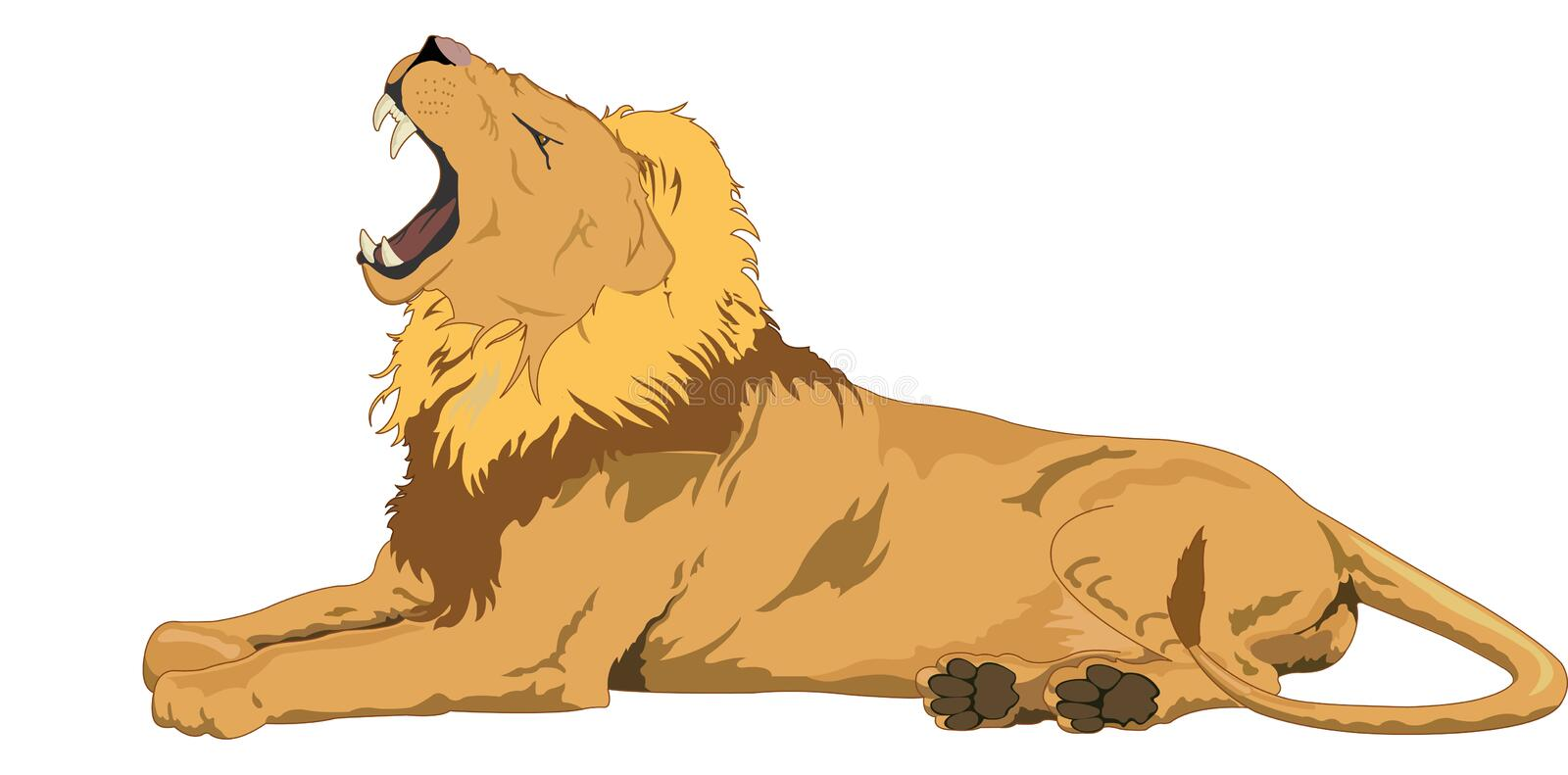 Lion, illustration. Male Lion Yawning, vector illustration royalty free illustration