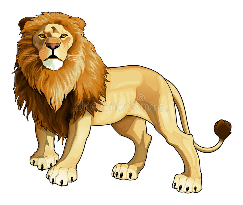 Lion king. Vector isolated animal