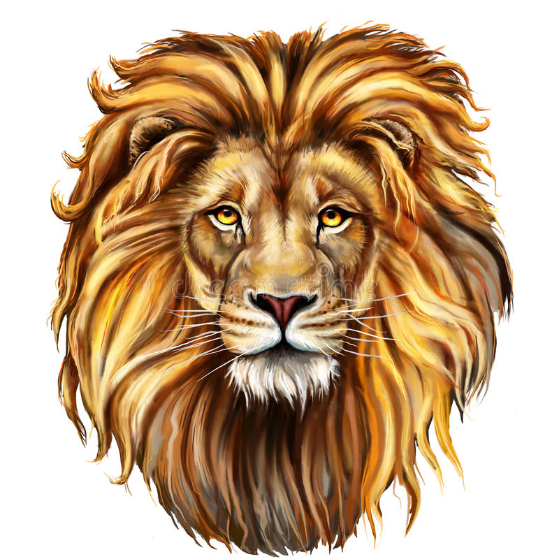 Lion male, aslan stock illustration