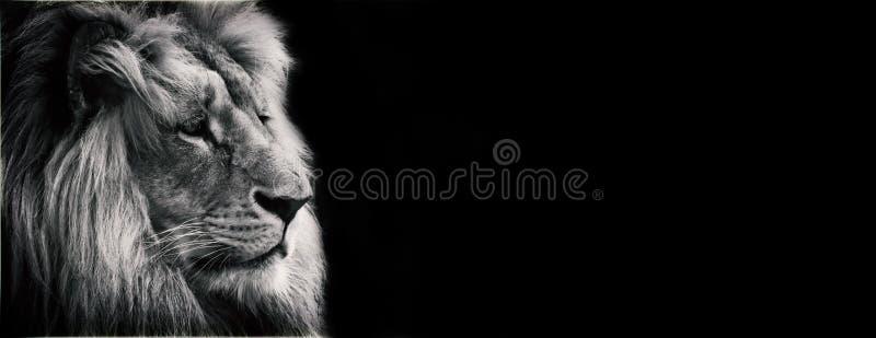 Lion noir et blanc de proposition photo stock