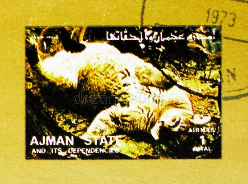 Lion (Panthera leo), Animals, big format serie, circa 1973. MOSCOW, RUSSIA - NOVEMBER 10, 2018: A stamp printed in Ajman shows Lion (Panthera leo), Animals, big royalty free stock images