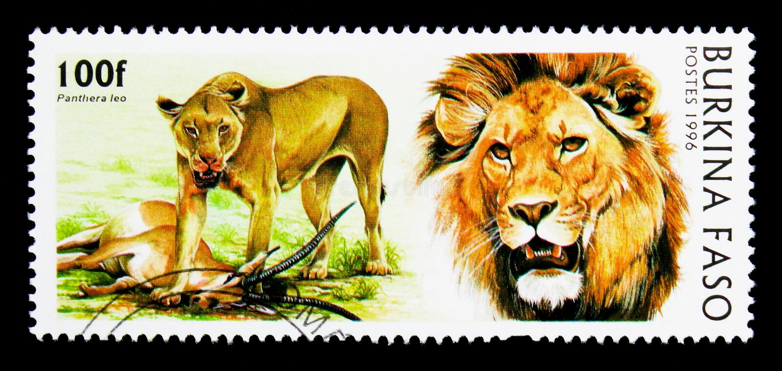 Lion (Panthera leo), Wild Cats serie, circa 1986. MOSCOW, RUSSIA - NOVEMBER 26, 2017: A stamp printed in Burkina Faso shows Lion (Panthera leo&# stock photography