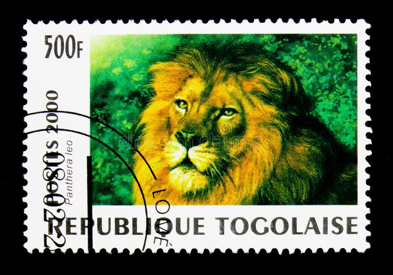 Lion (Panthera leo), Wild cats serie, circa 2000. MOSCOW, RUSSIA - NOVEMBER 26, 2017: A stamp printed in Togo shows Lion (Panthera leo), Wild royalty free stock photo