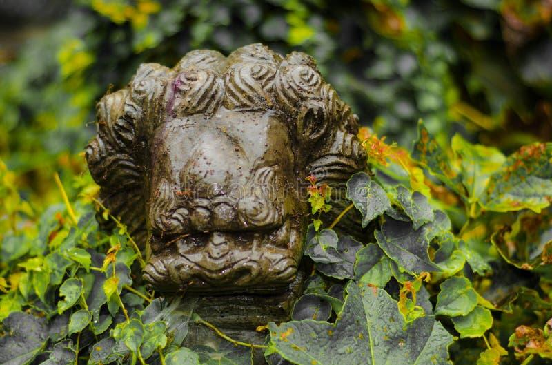 Lion par la pierre images stock
