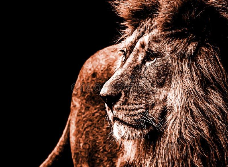Lion portrait in dark orange colours royalty free stock photo