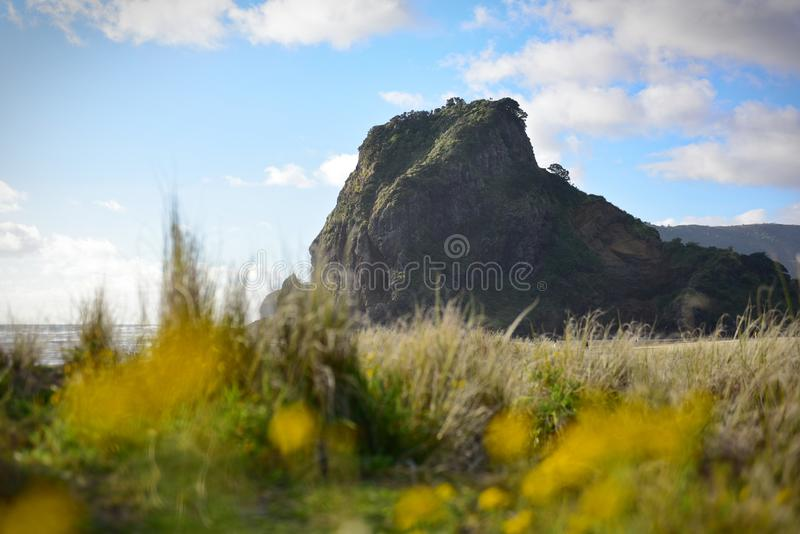The Lion Rock is Piha Beach`s most iconic landmark, at west coast Waitakere in New Zealand. The Lion Rock is Piha Beach`s most iconic landmark, at west coast stock photography