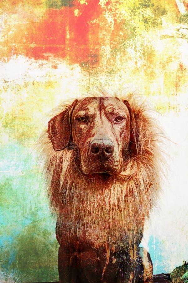 Lion& x27; s-hund/african& x27; s-hund arkivfoto