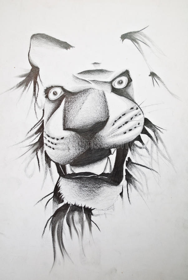 Lion sketch royalty free illustration
