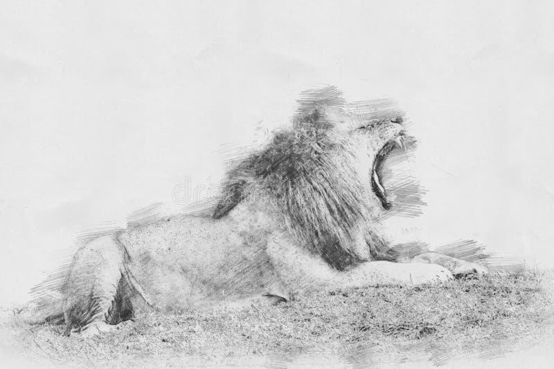 lion Skissa med blyertspennan royaltyfri illustrationer