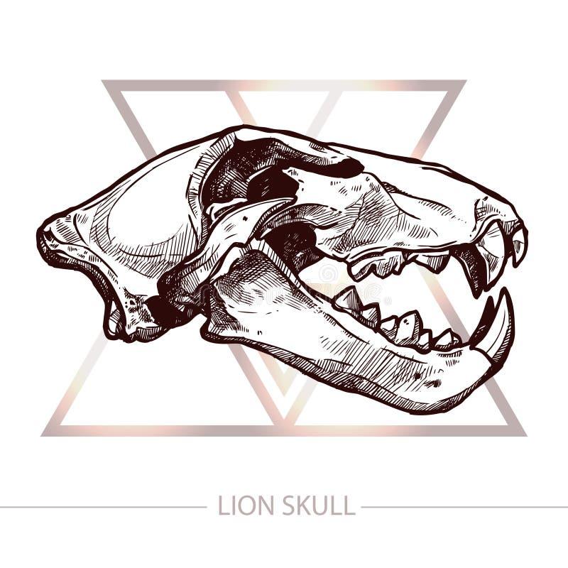 Lion Skull Hand Drawn stock illustratie