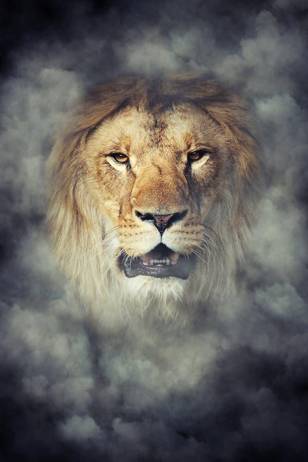 Lion in smoke on dark background royalty free stock photo