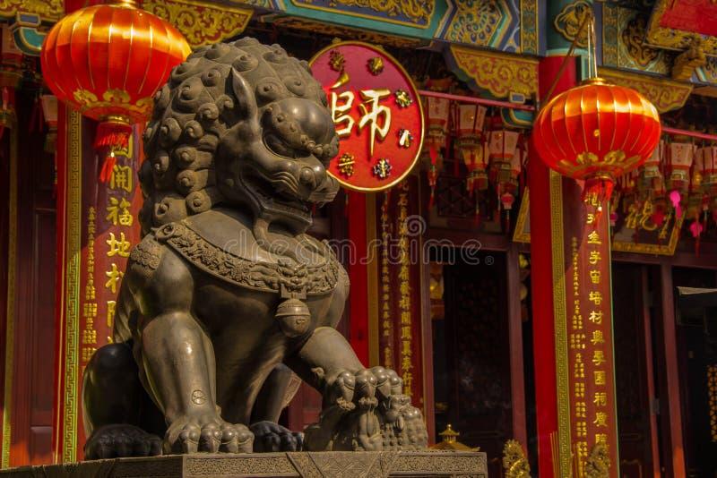 Lion sombre photos stock