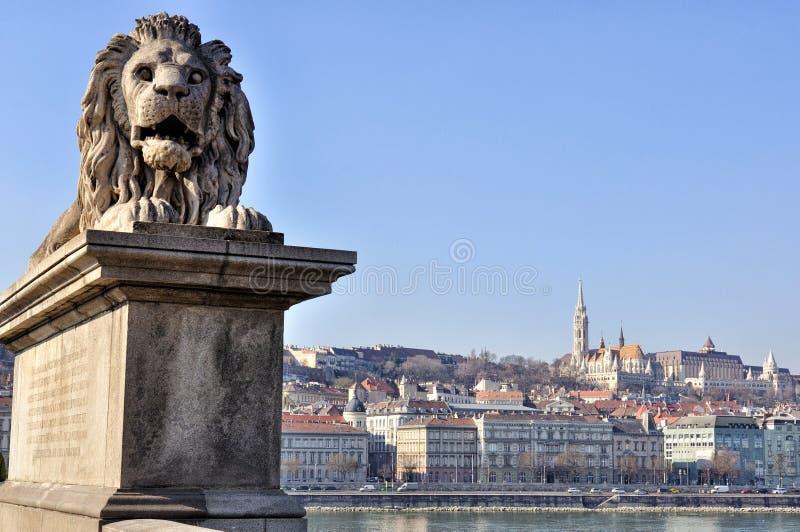 Lion Statue av den Chain bron, Budapest royaltyfria bilder