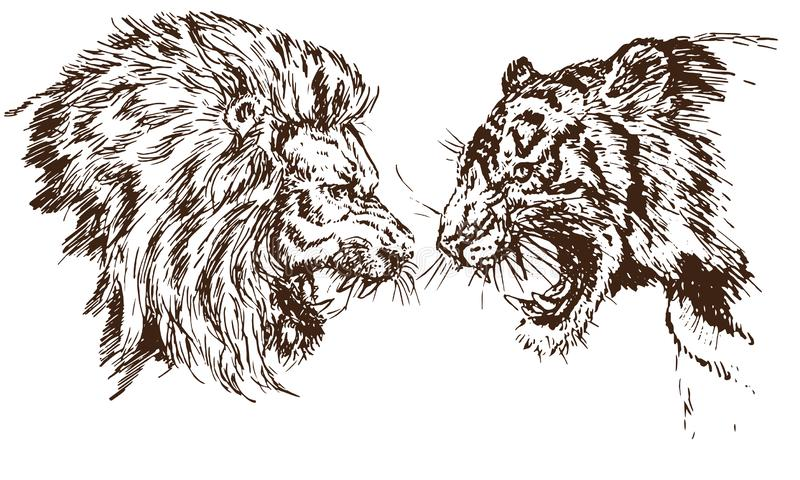 Lion and Tiger growling opposite each other, open an embittered mouth, canines, hand drawn doodle stock illustration