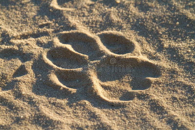 Download Lion track stock image. Image of five, outdoors, safari - 26536921