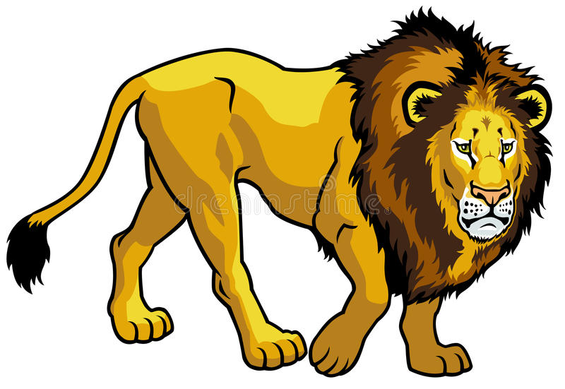 Lion on white background royalty free illustration
