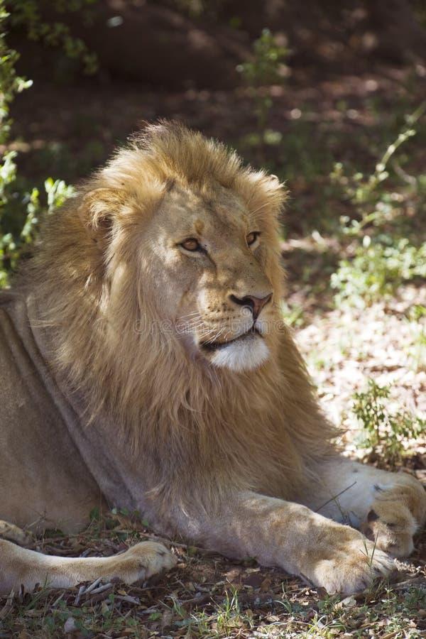 Lionbarn