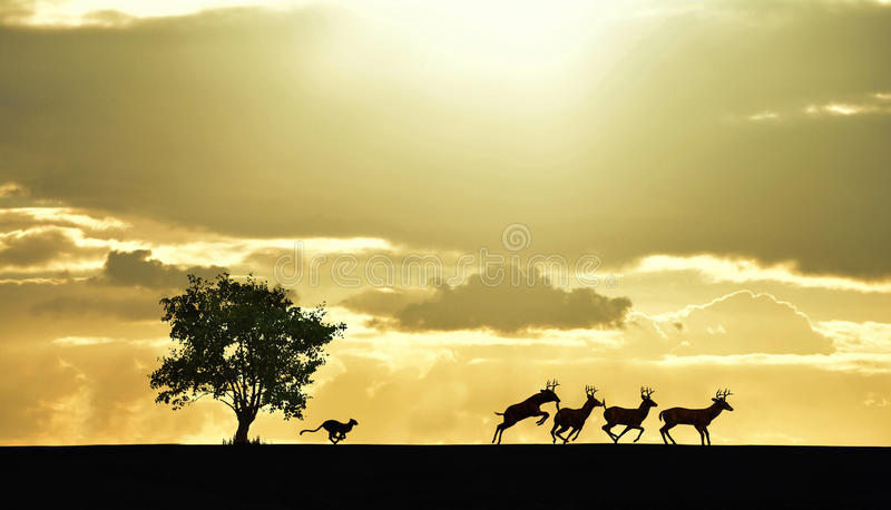 Lioness chasing prey royalty free stock images