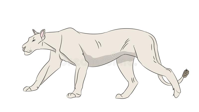 Lioness color, vector. White background stock illustration