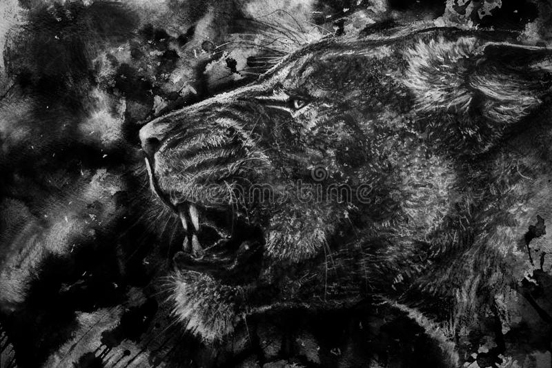 Lion growling charcoal sketch stock images