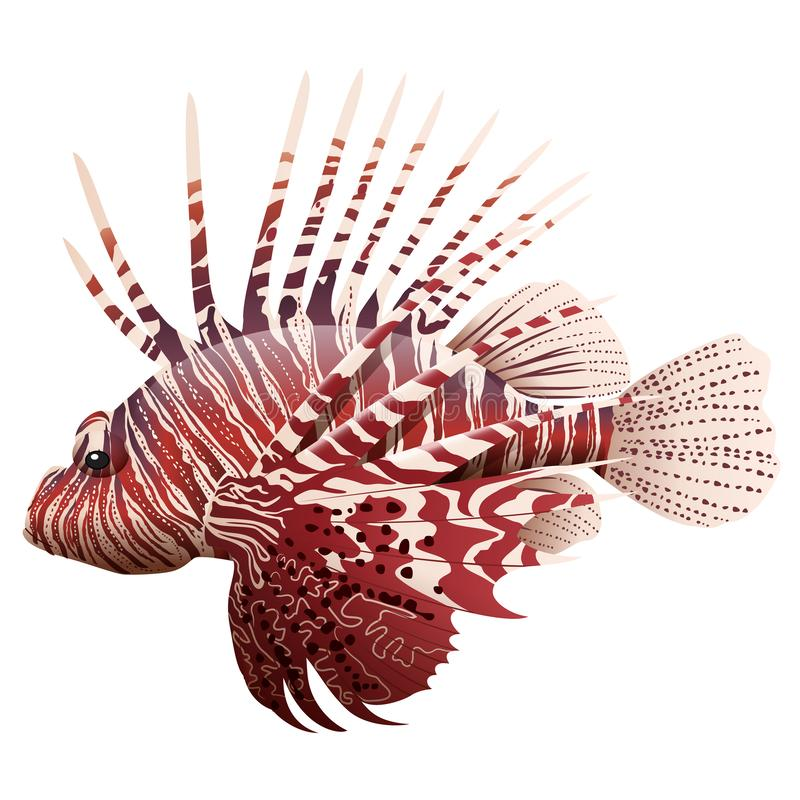 Lionfish de la historieta aislado stock de ilustración